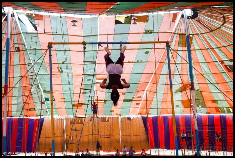 circus (2)