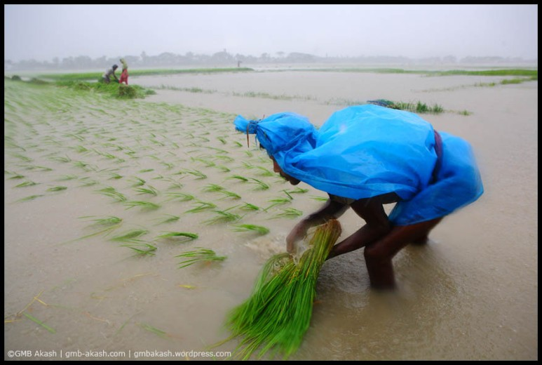 Monsoon (14)