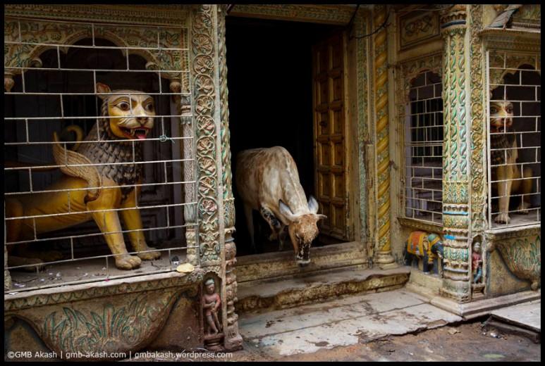 Varanasi2014 (14)